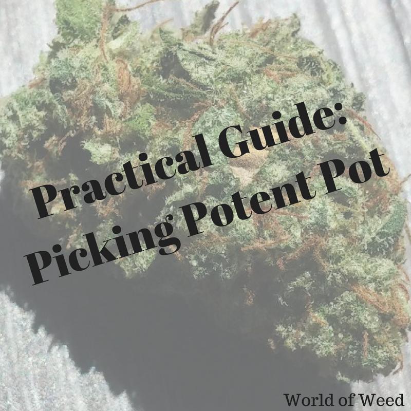 pick potent pot