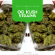 The Mysterious Origins of OG Kush Strains