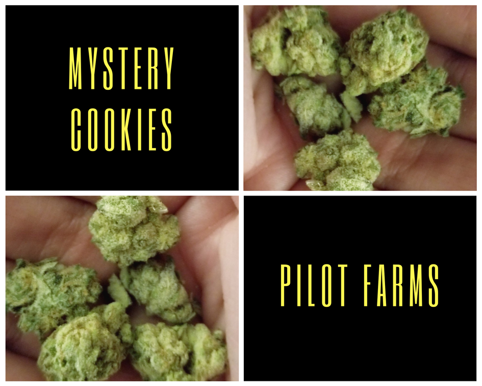 Mystery Cookies by Pilot Farms