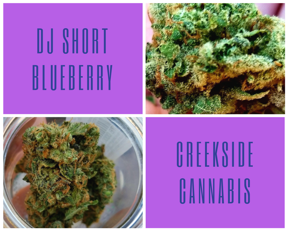 DJ Short Blueberry by Creekside Cannabis