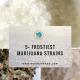 5+ Frostiest Marijuana Strains to Create Your Own Winter Wonderland