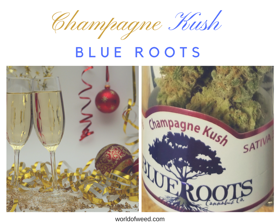 Champagne Kush by Blue Roots