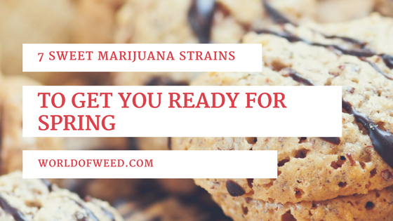 7 Sweet Marijuana Strains to Get You Ready for Spring