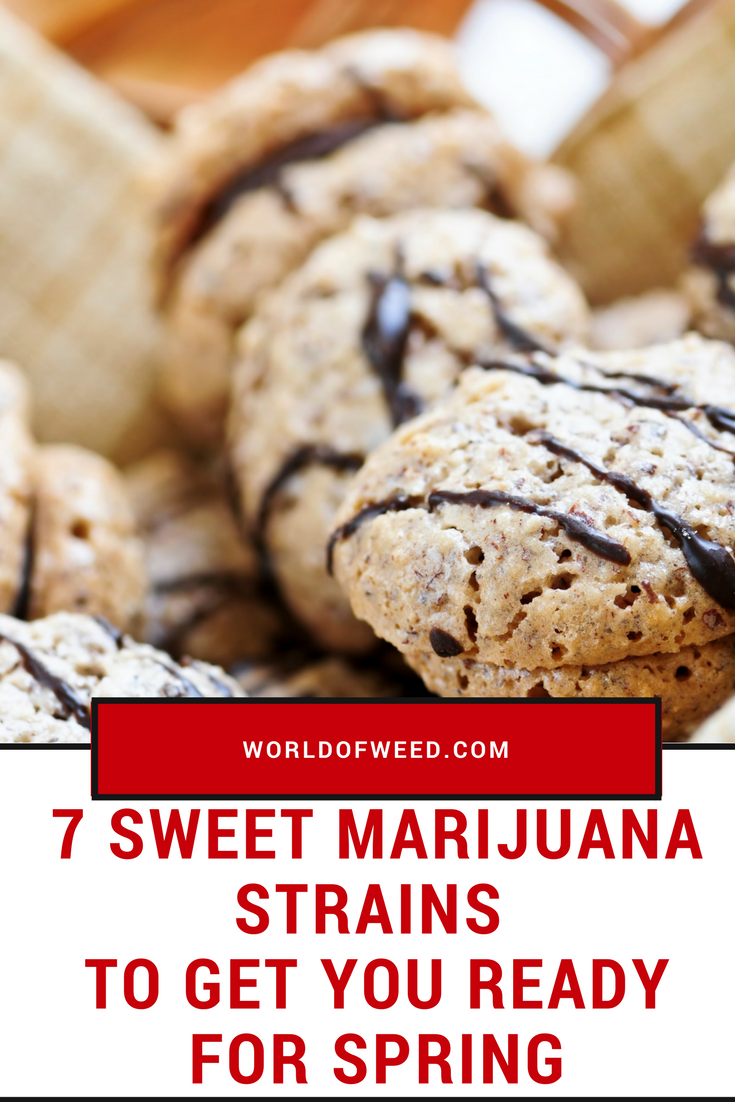 7 Sweet Marijuana Strains to Get You Ready for Spring | World Of Weed