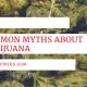9 Common Myths About Marijuana