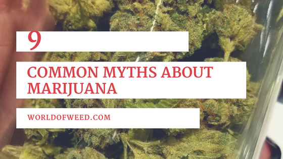 9 Common Myths About Marijuana