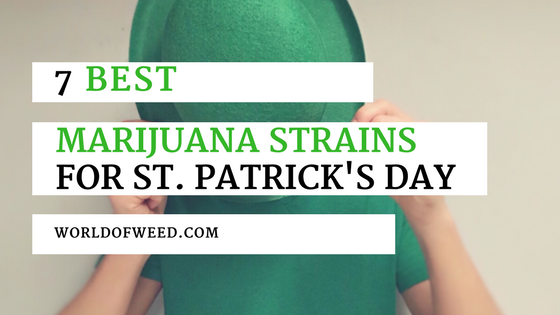 best marijuana strains for st. patrick's day