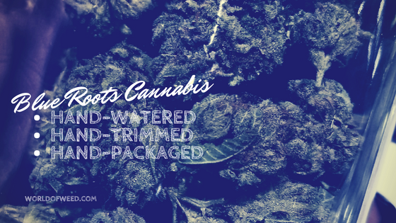 about-blue-roots-cannabis-products