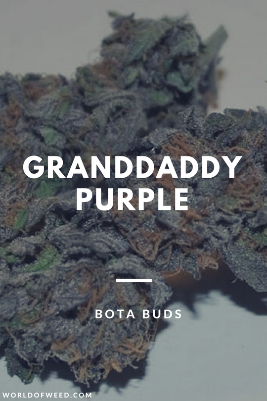The Granddaddy Purple Strain by Bota Buds