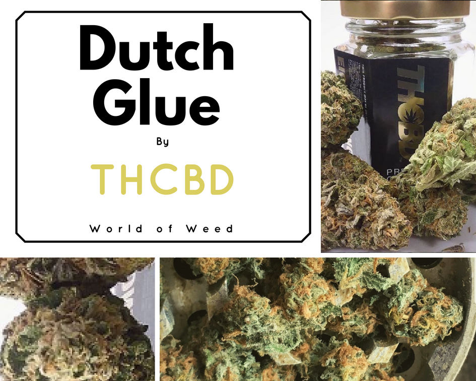 Dutch Glue strain THCBD