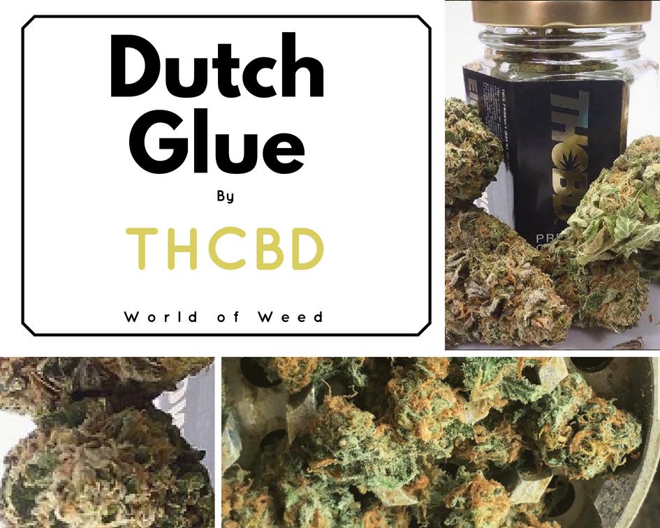 Dutch Glue by THCBD