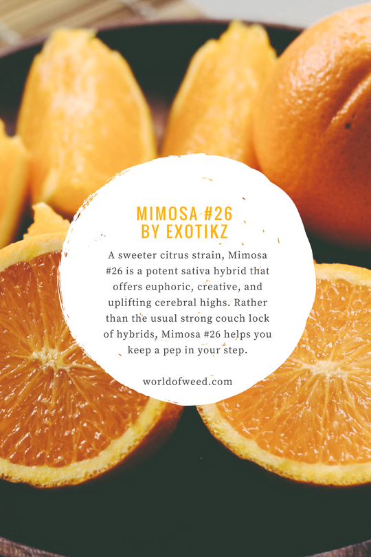Enjoy Brunch Even More With Mimosa #26 by Exotikz | World Of Weed