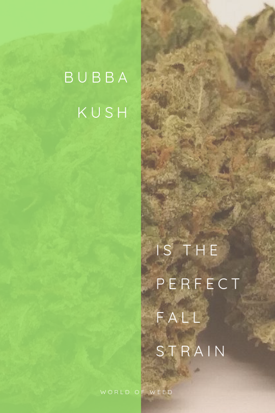 Bubba Kush is the Perfect Fall Strain