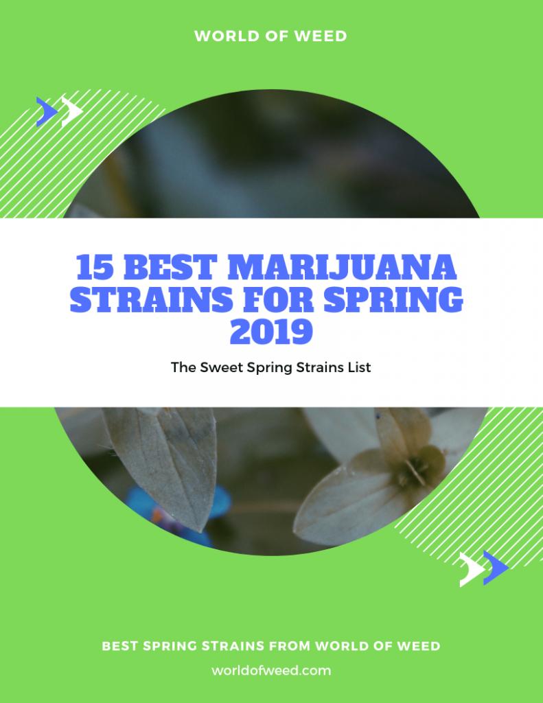 Best Marijuana Strains for Spring 2019