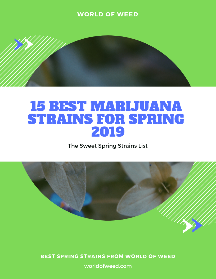 15 Best Marijuana Strains for Spring 2019