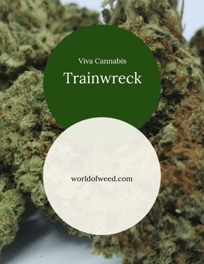Trainwreck Viva Cannabis