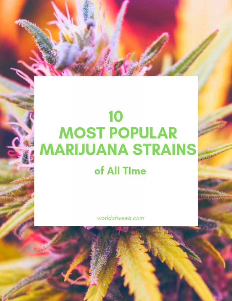 popular marijuana strains