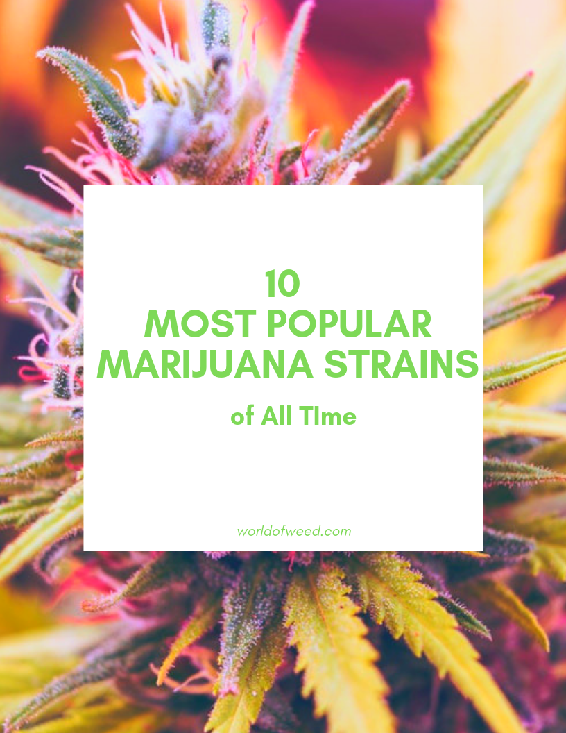 10 Most Popular Marijuana Strains of All Time