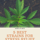 5 Best Strains for Stress Relief
