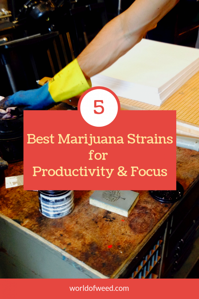 best marijuana strains for productivity and focus, best strains for productivity, Tacoma dispensary, Tacoma potshop