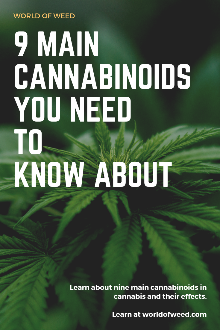 9 Main Cannabinoids You Need to Know About