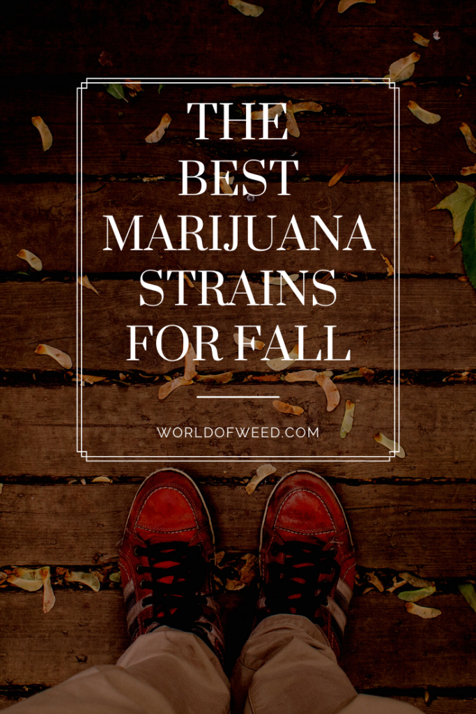 Best marijuana strains for fall