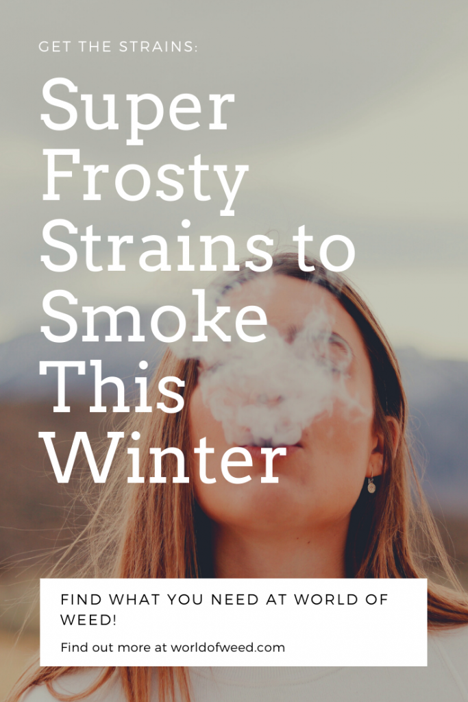 Super frosty strains to smoke this winter, from Tacoma dispensary World of Weed.
