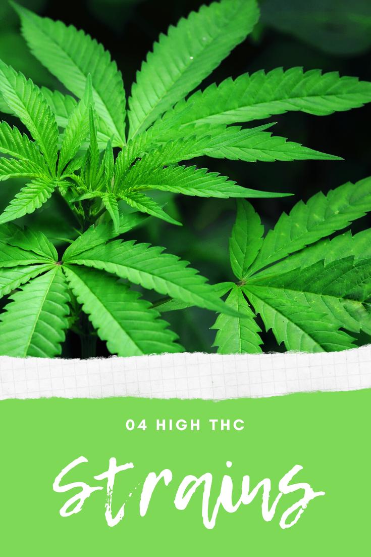 4 High THC Strains for Seasoned Stoners