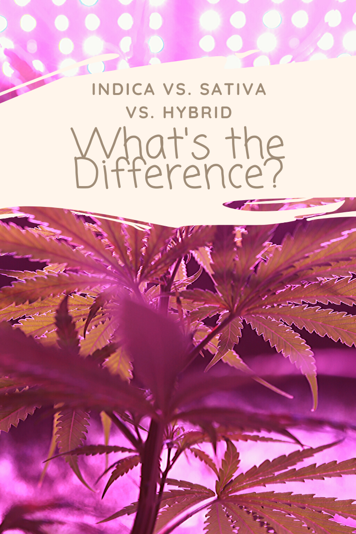Indica vs Sativa vs Hybrid: What's the Difference?