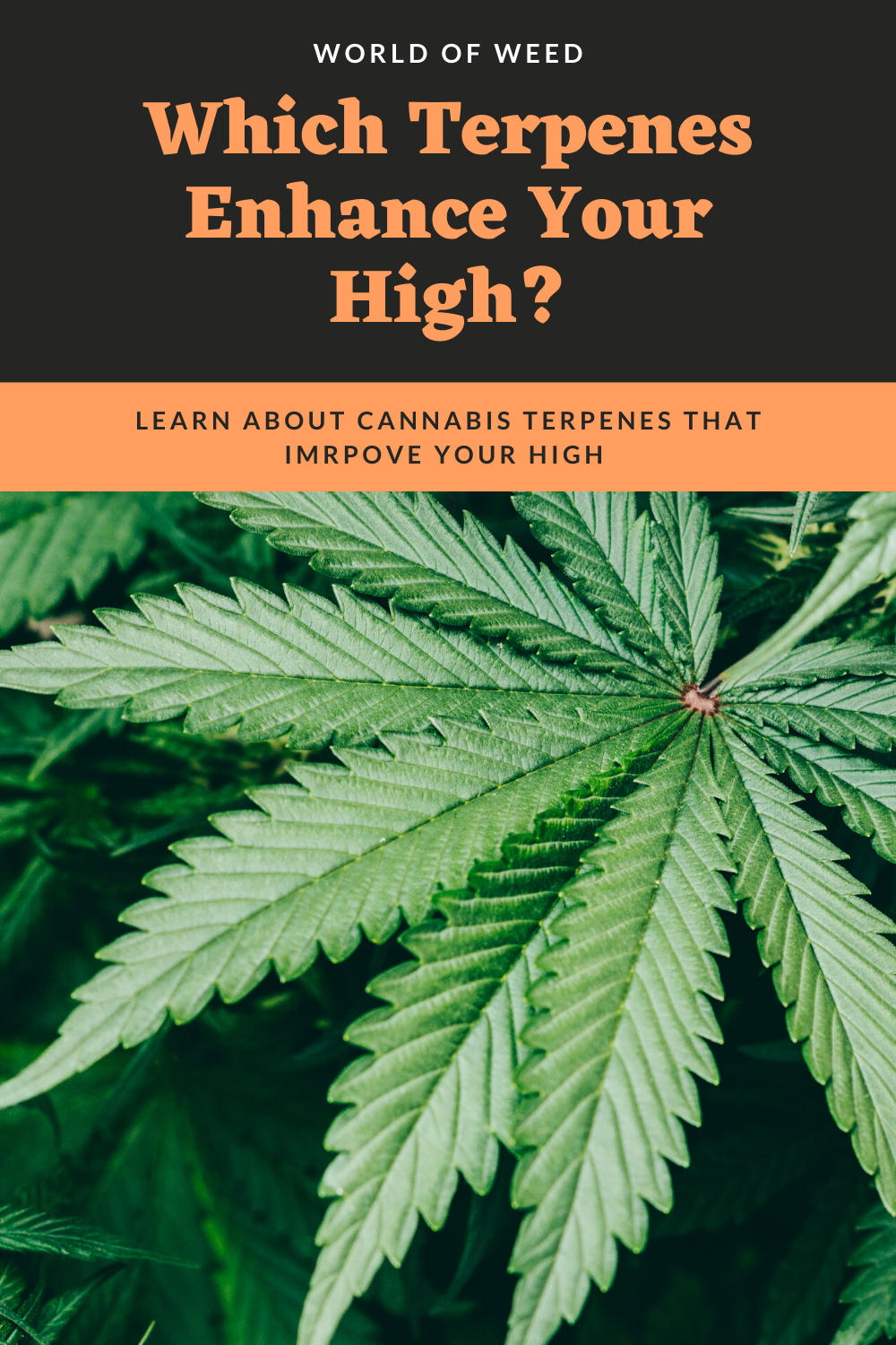 Which Terpenes Enhance Your High?