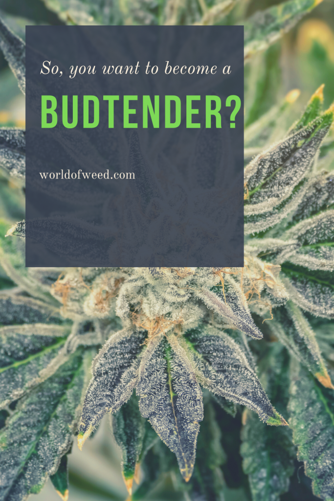 How to become a budtender - World of Weed, Tacoma dispensary