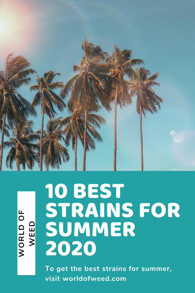 """Image of palm trees above text that reads """"10 Best Strains for Summer 2020"""""""