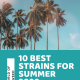 10 Best Strains of Summer 2020