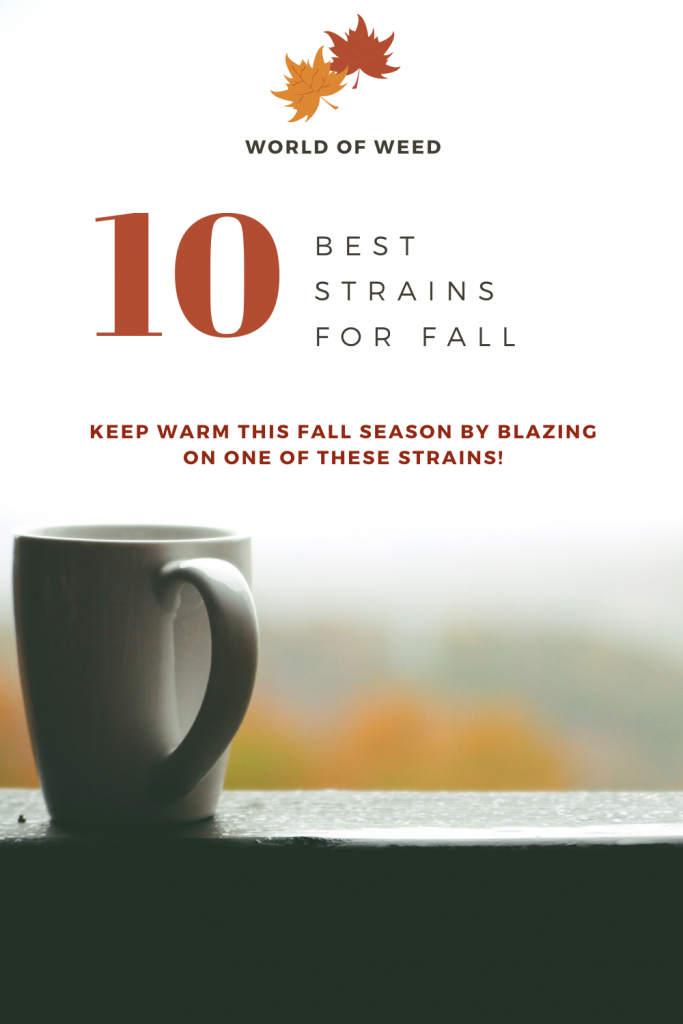10 Best Fall Strains for 2020