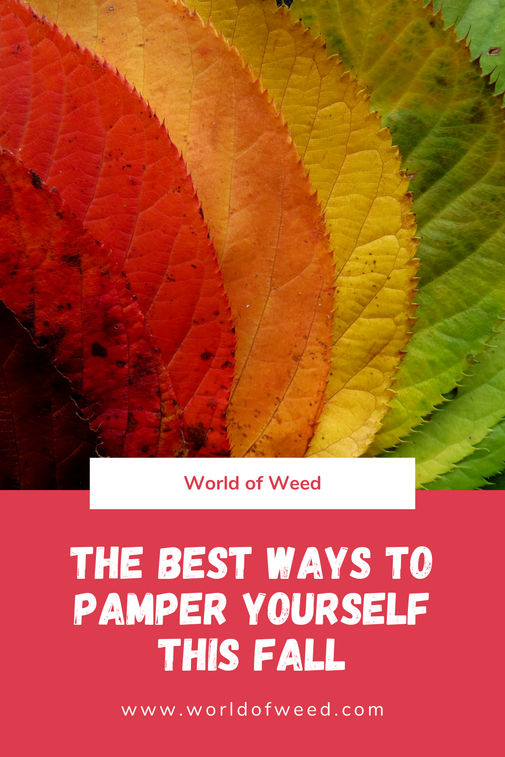 The Best Ways to Pamper Yourself This Fall