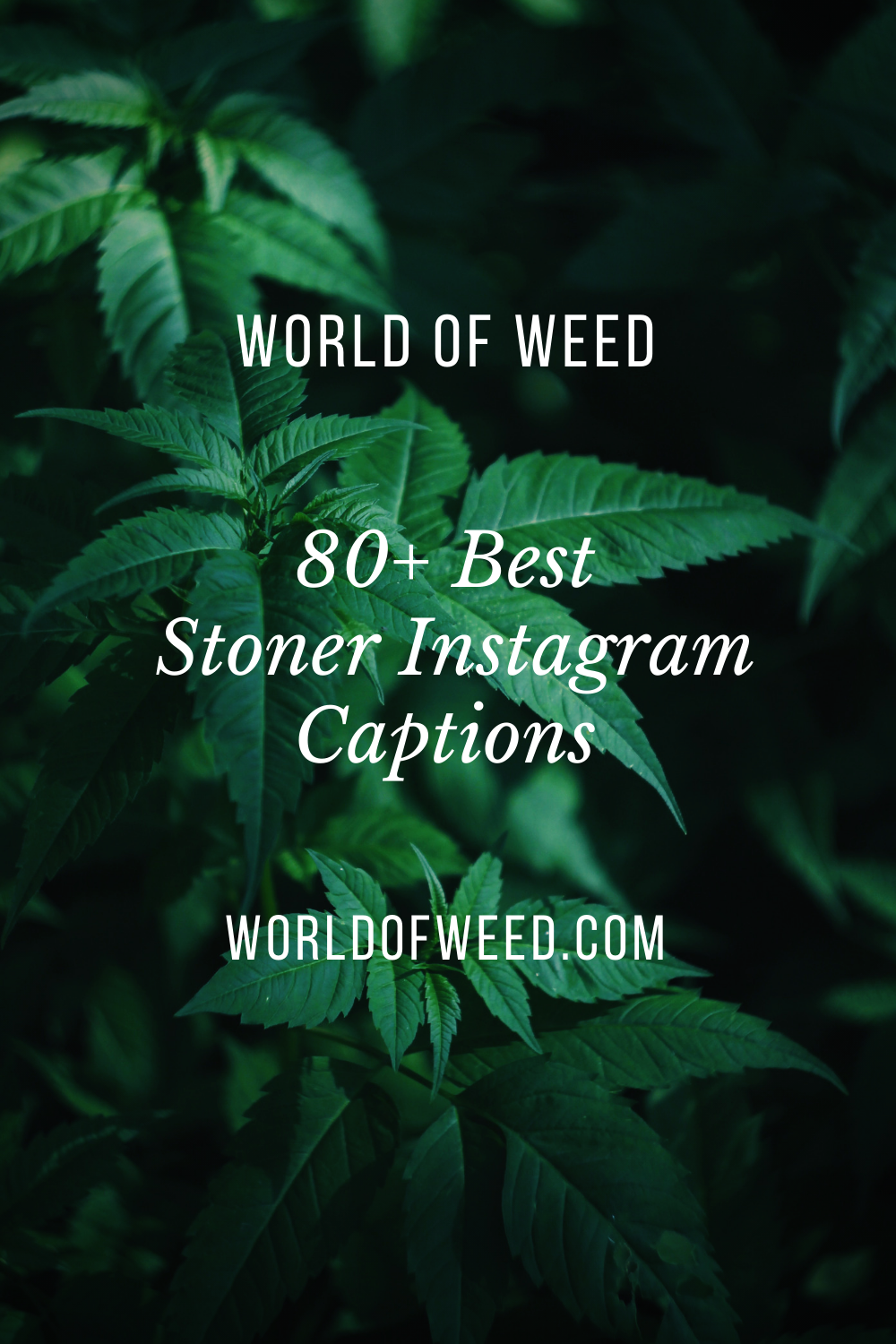 80+ Best Stoner Instagram Captions