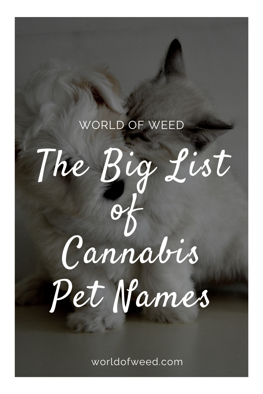 The Big List of Cannabis Pet Names