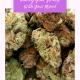 Pairing Cannabis Strains and Mood