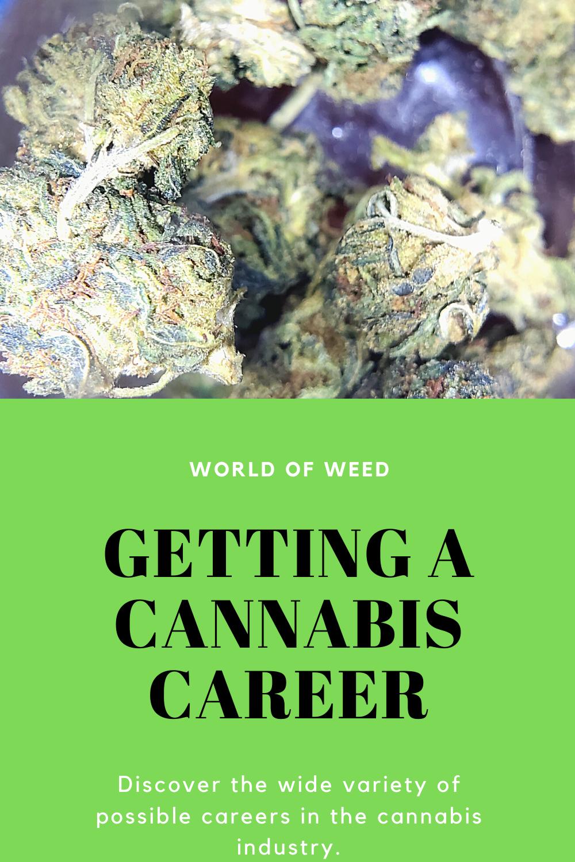 Getting a Cannabis Career