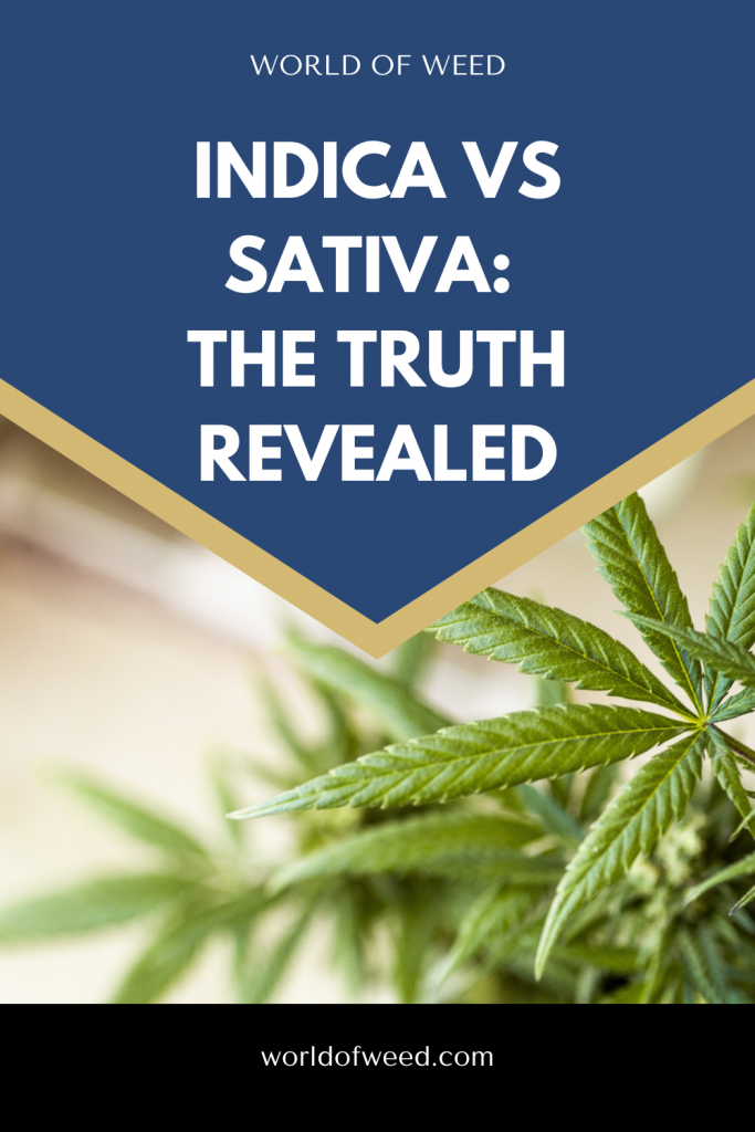 the truth about indica vs sativa by tacoma dispensary world of weed