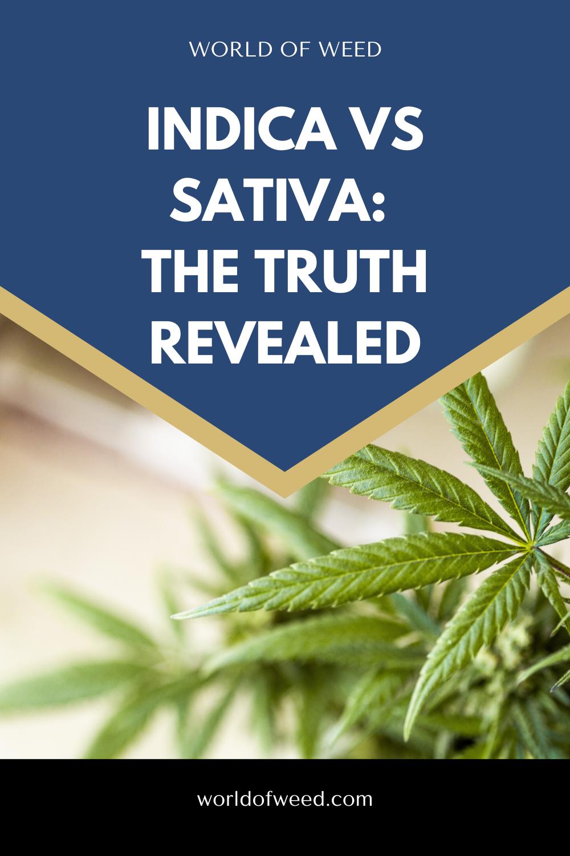 Indica vs Sativa: The Truth Revealed